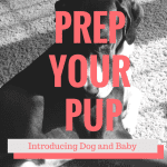 Prep Your Pup: Introducing Dog and Baby
