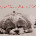 Is it Time for a Pet?