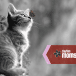 New Moms: You'll Still Love Your Cat