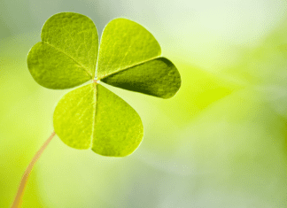 March Events Featured Image with Shamrock